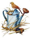 Old watering can with a nest of blue eggs. Nest with blue eggs in an old watering can, on a watering can bird around the straw stock illustration