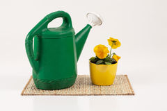Old Watering Can with Pansey. Studio shot on a white background of an old green plastic watering can and a potted yellow pansy on a mat Stock Photos