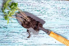Old watering can with seedlings of flowers and vegetables on retro wooden background. Vintage home garden and planting objects,. Old watering can with seedlings stock image