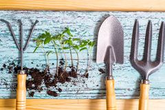 Old watering can with seedlings of flowers and vegetables on retro wooden background. Vintage home garden and planting objects,. Old watering can with seedlings royalty free stock photography