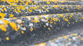 Old wavy roofing slate covered with lichen Royalty Free Stock Photo