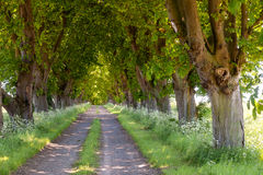 Old country road in Mecklenburg-Vorpommern, Germany Stock Images