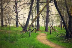 Old way in the wood. On spring Royalty Free Stock Photos