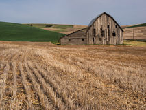 Old weathered barn surrounded by wheat fields. An old weathered barn is surrounded by rolling hills planted in wheat in The Palouse of south eastern Washington Royalty Free Stock Images