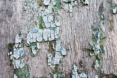 Old, weathered boards with peeling paint. Stock Photos