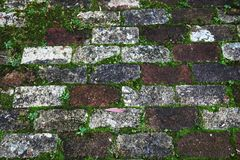Old and weathered brick footpath with overgrown moss Stock Images