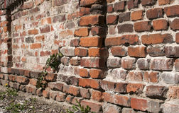 Old weathered brickwall Stock Photography
