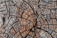 Old Weathered Rotten Cracked Stump Cross Section Grunge Surface Detail. Old, weathered, rotten wooden railroad cross-tie, with radial cracks on the cross-section Royalty Free Stock Photography
