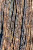 Old Weathered Cracked Timber Grunge Surface Texture. Old, weathered, rotten wooden railroad cross-tie lateral cracks, with patches of lichen and fungi growth Stock Image