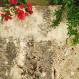 Old weathered and dirty wall with flowers Stock Photos