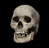 Old Weathered Human Skull Stock Images
