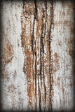 Old Weathered Knotted Wood Rough Battered Grooved Vignetted Grunge Texture Stock Images