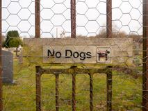 Old weathered no dogs sign on metal fence. Essex; england; uk Stock Photo