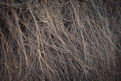 Old weathered palm texture straw macro close-up Stock Photography