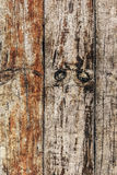 Old Weathered Knotted Floorboards Rotten Cracked Surface Grunge Texture. Old, weathered, rotten knotted Pinewood Floorboards with extremely rough surface Royalty Free Stock Images