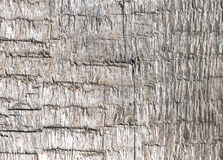 Old weathered rough wood background or texture. Stock Image