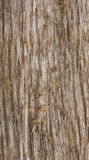 Old weathered rough wood tree bark grunge natural surface wooden background Royalty Free Stock Photo