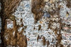 Old weathered stone wall partially covered in dried up vegetation royalty free stock images
