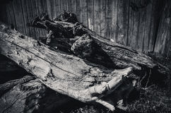 Old weathered tree stump with root.  Royalty Free Stock Photos
