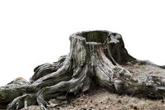 Old weathered tree stump Royalty Free Stock Image