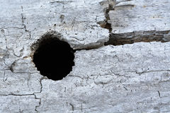 Old weathered wood log with hole Stock Photography