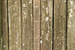 Old weathered wood planks covered with moss Royalty Free Stock Photo