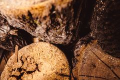 Old weathered wood texture with cross section of log cut. In lathe workshop Stock Photography