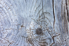 Old, weathered wooden board Stock Photo