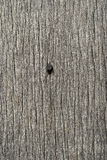 Old weathered wooden board nail. Old weathered grey wooden board with nail head stock photo