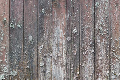 Old weathered wooden planks with white mold. Natural wood texture Stock Images