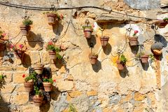 Old weathering wall with lot of flower pots Stock Photos