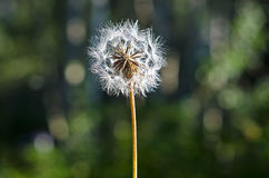 Old weed. A soft old weed soaking up the sun stock photo