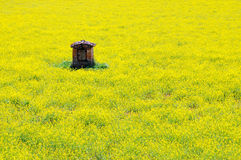 Old well. An old well in the middle of a yellow rape field Royalty Free Stock Photography