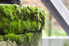 Old well with moss Stock Photo