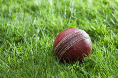 Old well used cricket ball in a grass Royalty Free Stock Photography