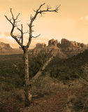 Old West. A dead tree framing the desert and mountain formations in Sedona, Arizona Stock Images