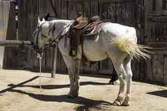 Old Western Town Horse Riding Stables. Two horses stand saddled and ready for a ride Royalty Free Stock Photography