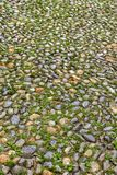 Old wet pebble pavement in Turin Stock Images