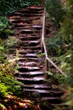 Old Wet Stone Steps. Old wet stone steops in a forest Royalty Free Stock Photo