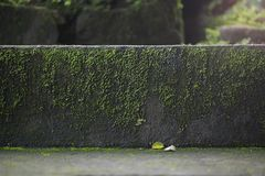 Old wet stone steps. Filled with moss, macro texture Royalty Free Stock Images