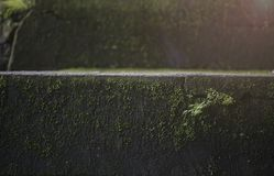 Old wet stone steps. Filled with moss, macro texture Stock Photo