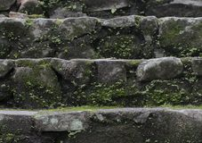 Old wet stone steps. Filled with moss, macro texture Stock Photography