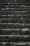 Old wet stone steps. Filled with moss, macro texture Stock Image