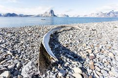 Old whale bone on the coast of Svalbard, Arctic Stock Photo