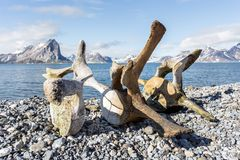Old whale bones on the coast of Spitsbergen, Arctic Stock Images