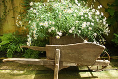 Old wheel barrow. An old wheel barrow in a classic glass house setting stock photo