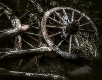 The old wheel carts was frazzled with many plants in the garden decoration Stock Photo