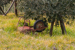 Old wheelbarrow abandoned upside down in the grass under an oliv Stock Image