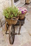 Old wheelbarrow with baskets of flowers Stock Image