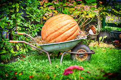 Old wheelbarrow with big pumpkin Royalty Free Stock Photography
